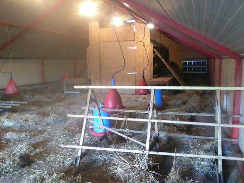 Le poulailler prêt à accueillir les nouvelles poulettes. En bleu, les mangeoires, en rouge les abreuvoirs, on voit aussi les perchoirs et dans le fond le pondoir en galva.